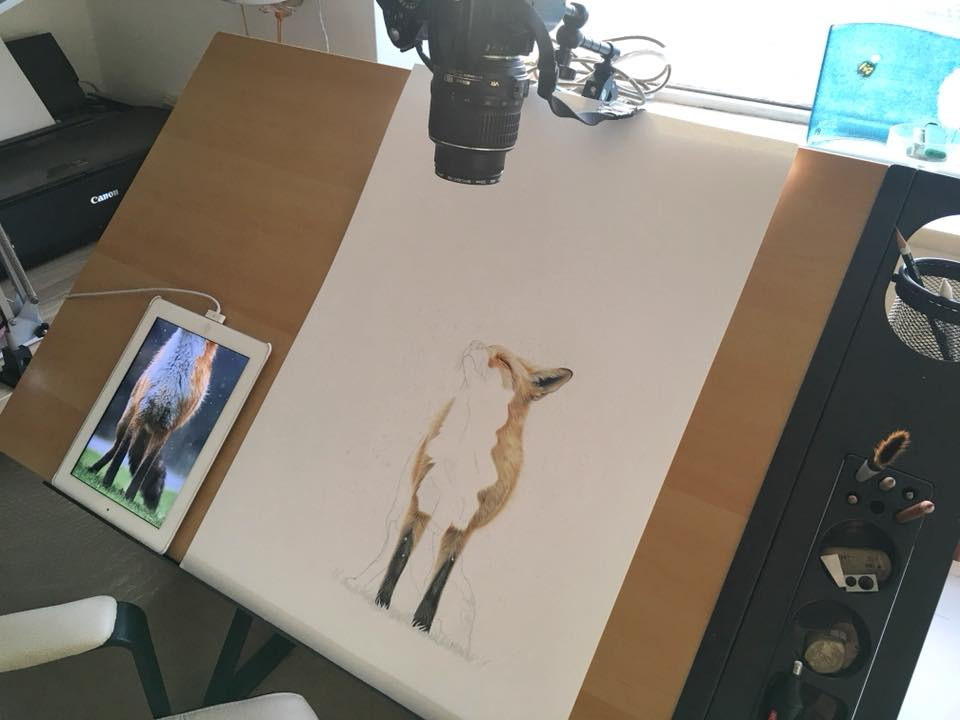 Filming a time-lapse of creating a fox with Derwent procolour pencils