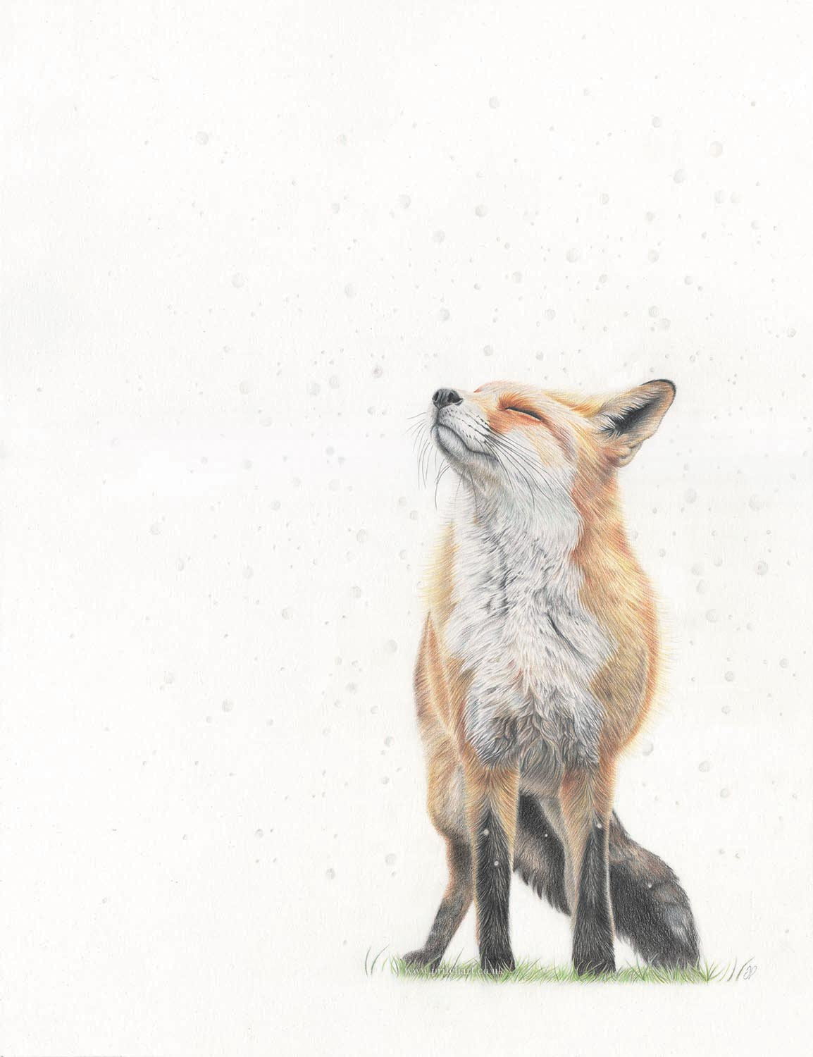 A drawing of a fox in snowfall drawn with Derwent Procolour pencils
