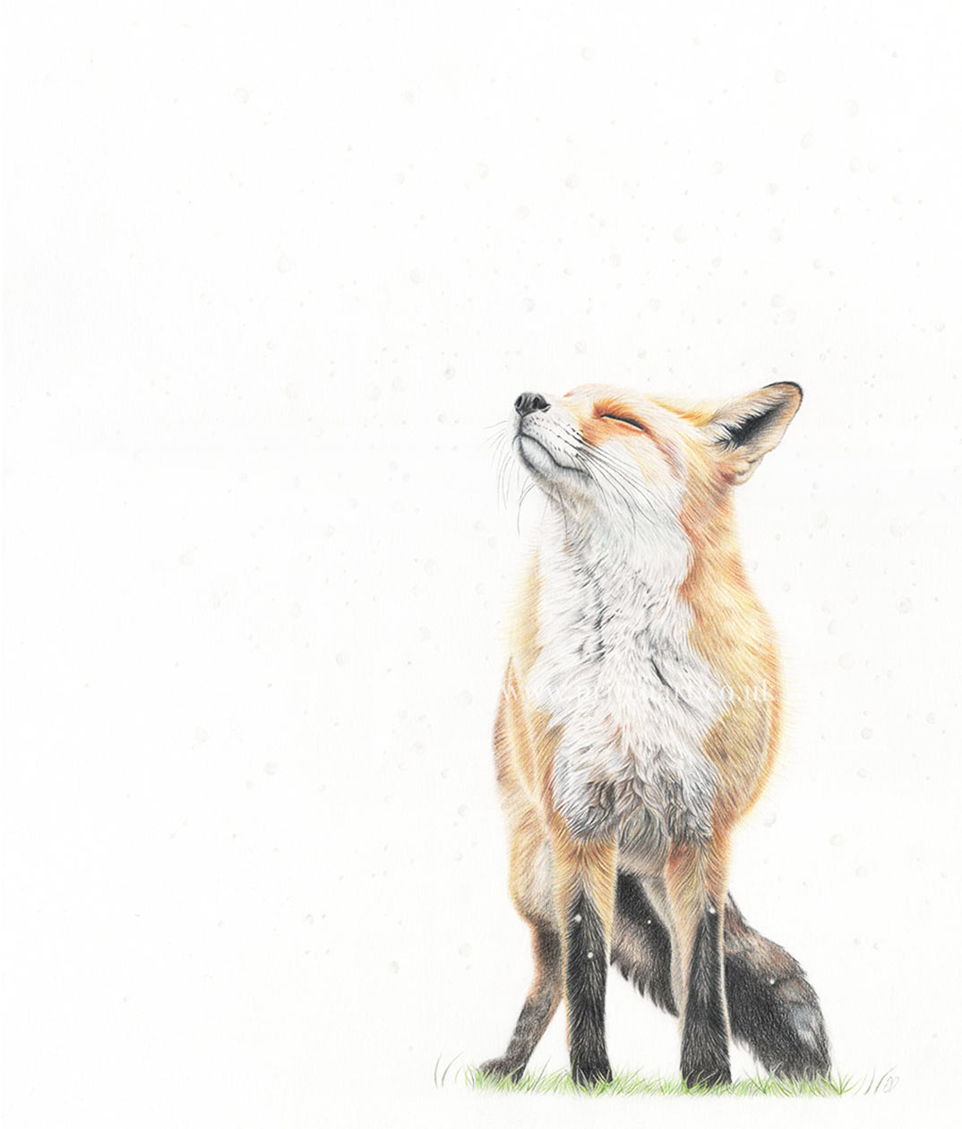 Pritch Art - 'Snowfall' Fox