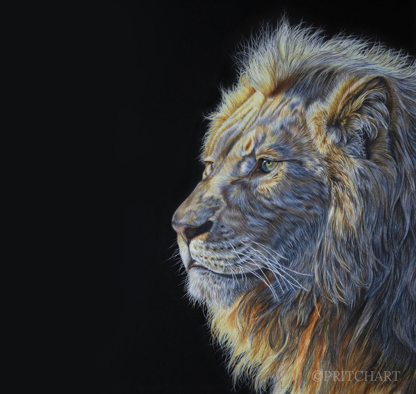 Pritch Art - 'Dawn of the King' African Lion