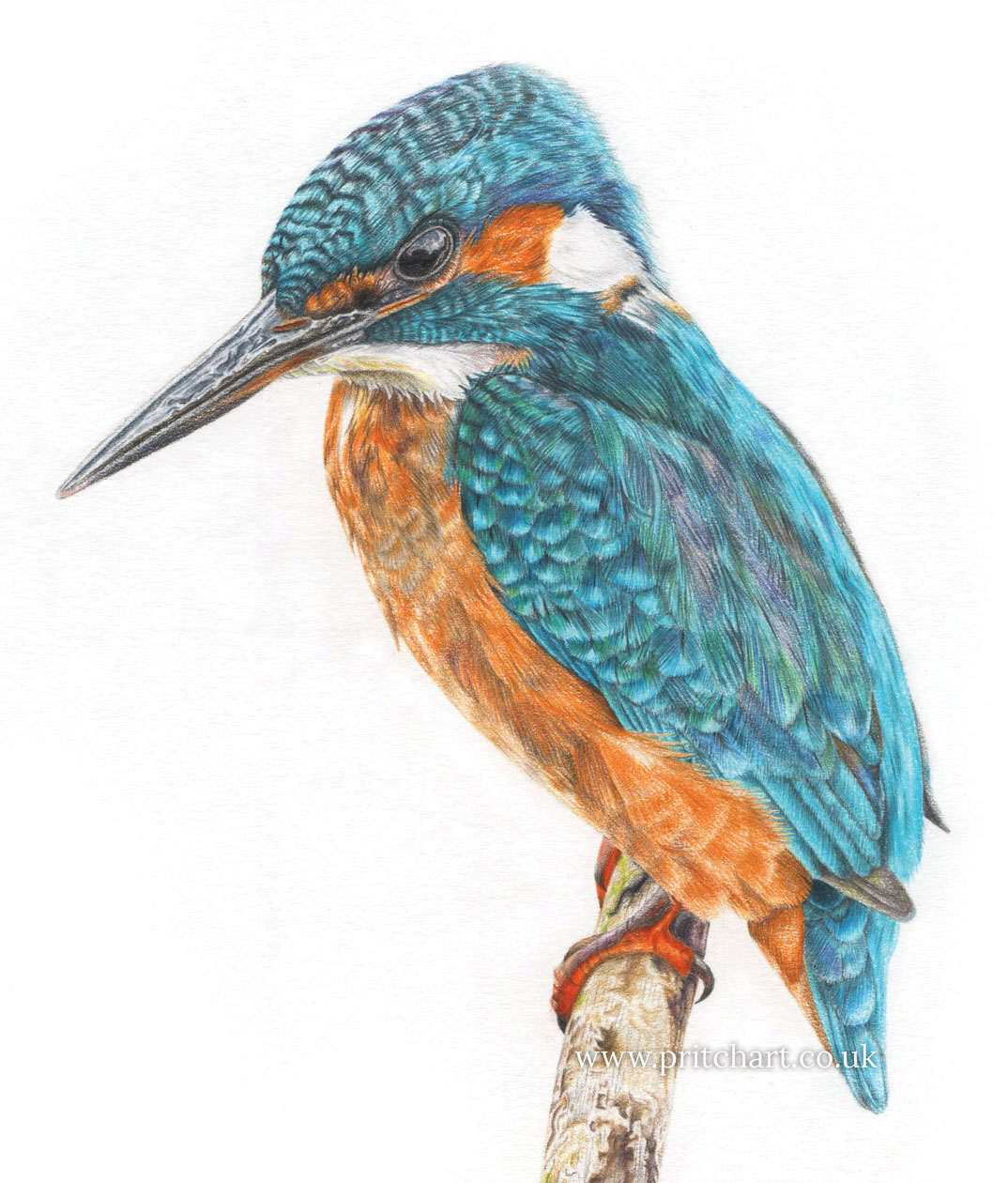 Pritch Art - Kingfisher