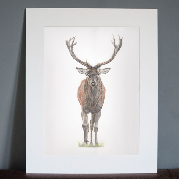 Majesty mounted print - Preview image  British Wildlife Art