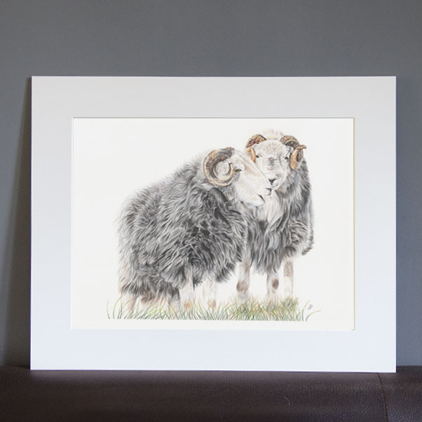 British Wildlife - Herdwicks mounted print