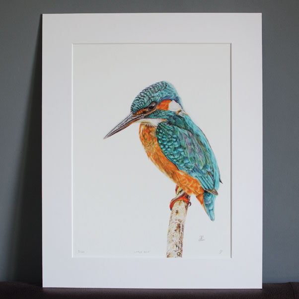 Little Blue mounted print - Preview image  British Wildlife Art