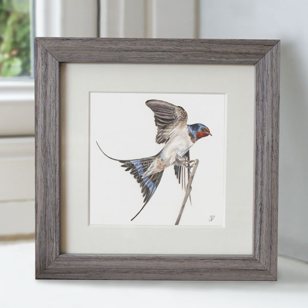 Swallow - Preview image  British Wildlife Art