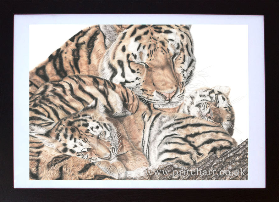 A mother's love - Preview image  British Wildlife Art