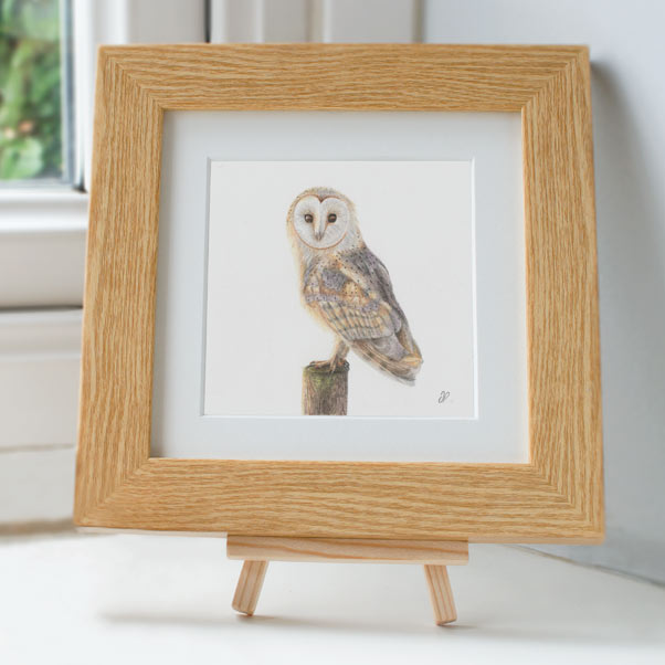 Barn Owl - Preview image  British Wildlife Art