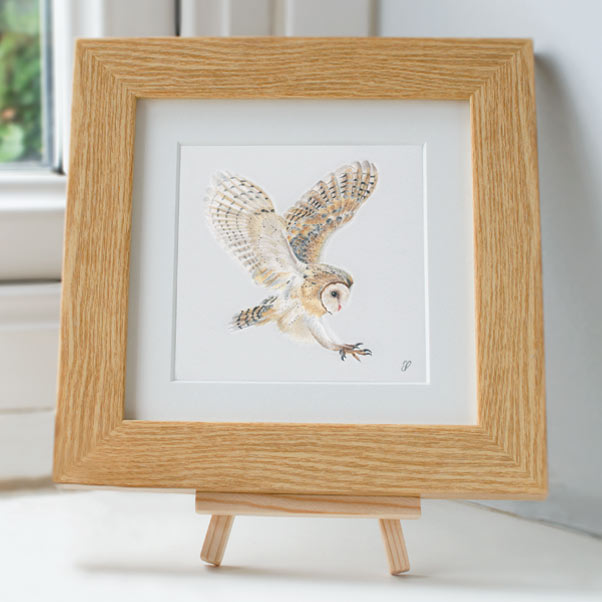 Barn Owl in flight - Preview image  British Wildlife Art