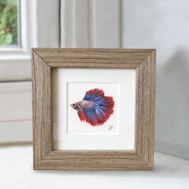 Betta fish - Preview image  British Wildlife Art