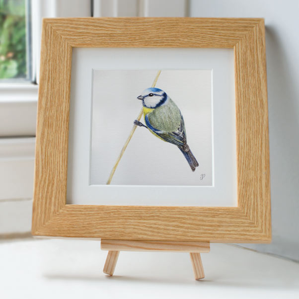 Blue tit - Preview image  British Wildlife Art