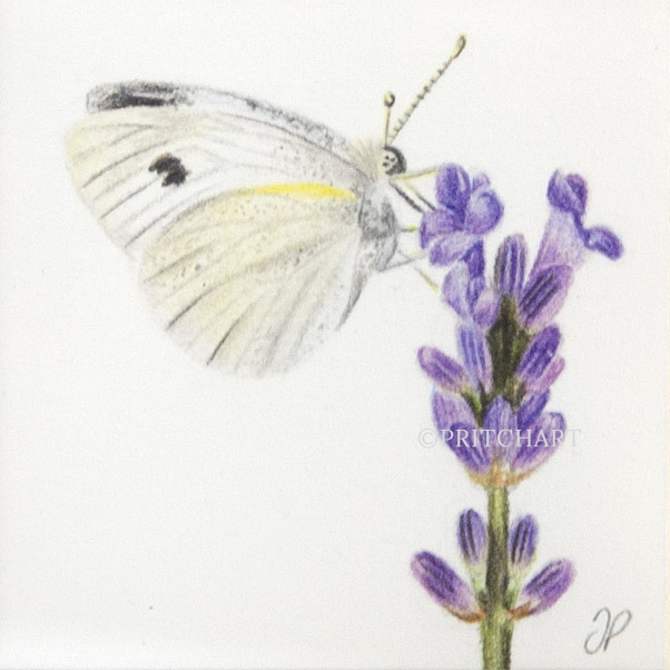 Cabbage Butterfly thumbnail 2