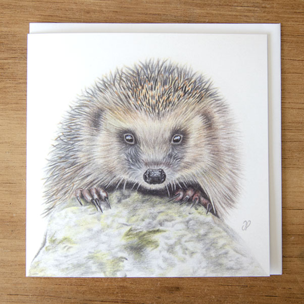 Hedgehog Greeting Card - Preview image  British Wildlife Art