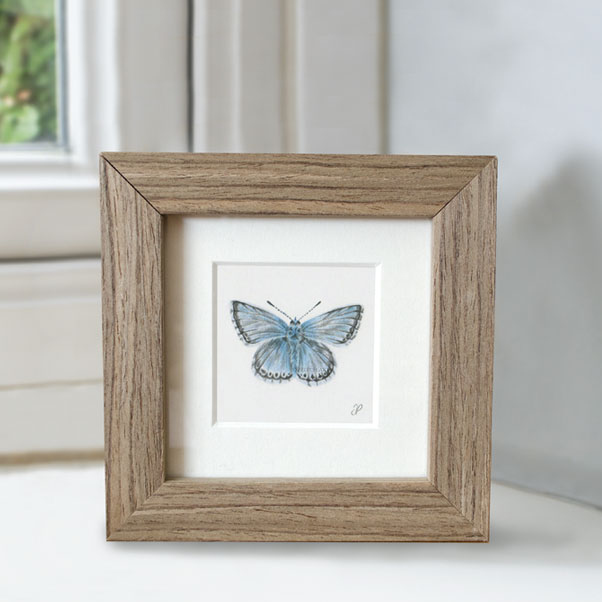 Minature collection - Chalkhill Blue Butterfly