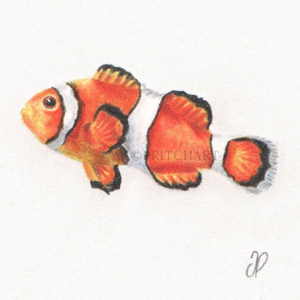 Clownfish thumbnail 2