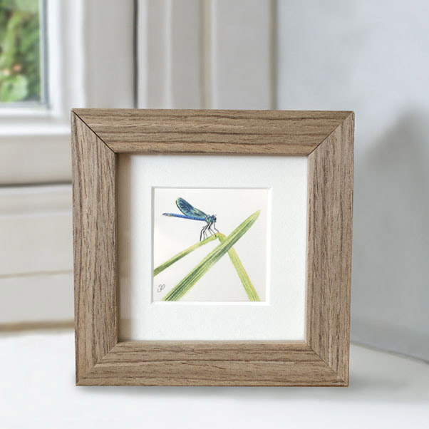 Dragonfly - Preview image  British Wildlife Art
