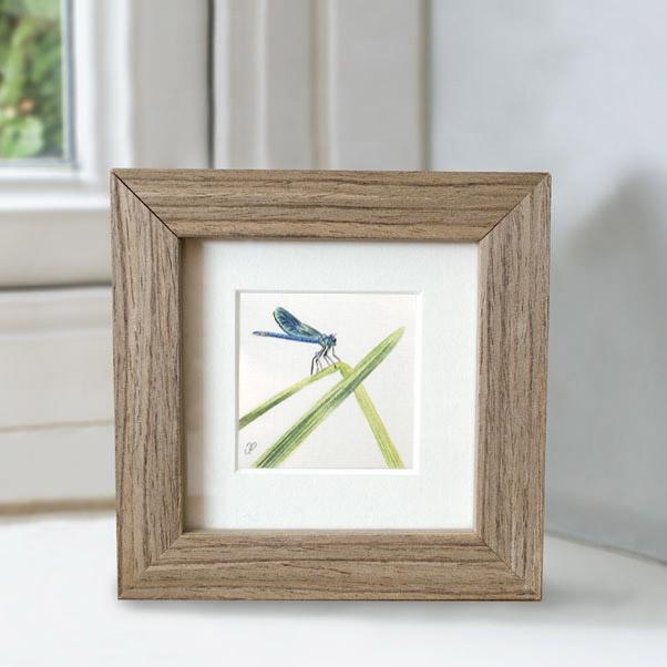 British Wildlife - Dragonfly