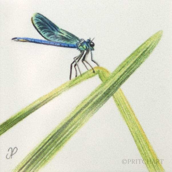 Dragonfly thumbnail 2