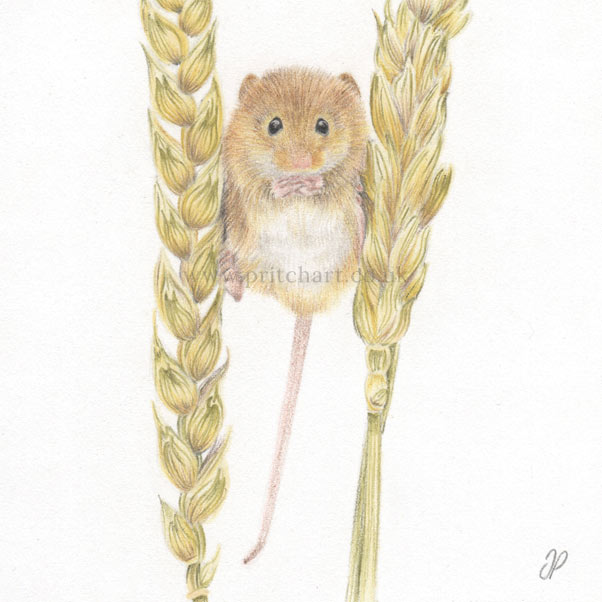 Field Mouse thumbnail 2