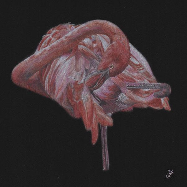 Flamingo thumbnail 2