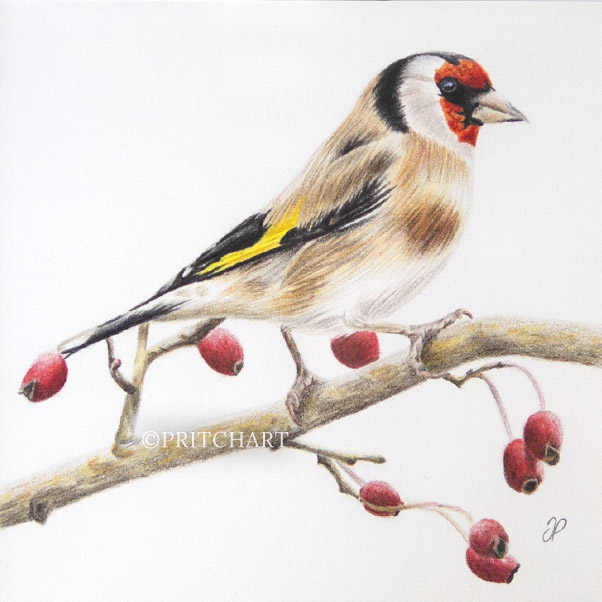 Goldfinch thumbnail 2
