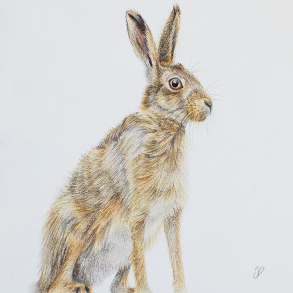 Hare thumbnail 2