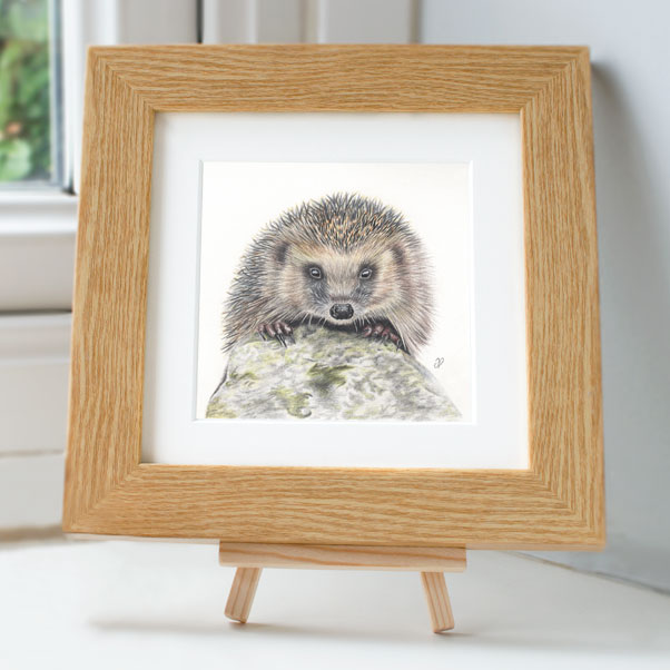 Hedgehog - Preview image  British Wildlife Art