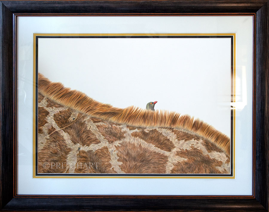 Hitchhiker - Preview image  British Wildlife Art