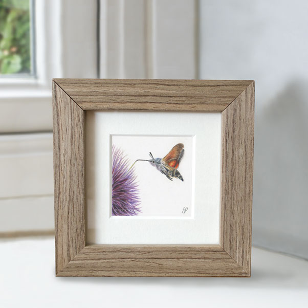 Hummingbird Hawk Moth - Preview image  British Wildlife Art