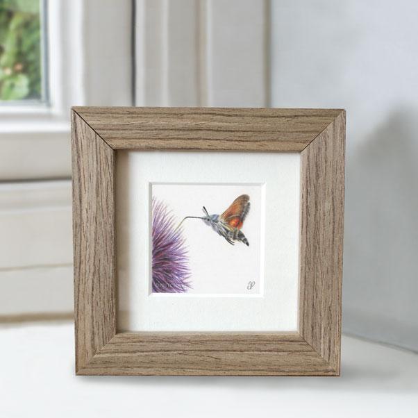 British Wildlife - Hummingbird Hawk Moth