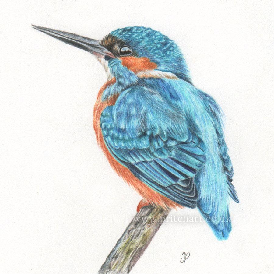 Kingfisher thumbnail 2
