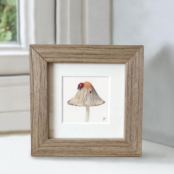 British Wildlife - ladybird
