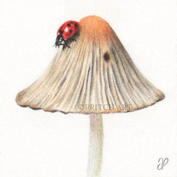 ladybird thumbnail 2