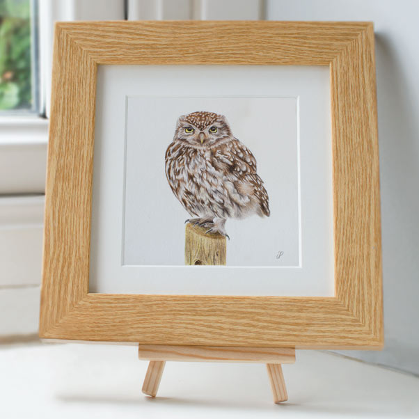 Little Owl - Preview image  British Wildlife Art