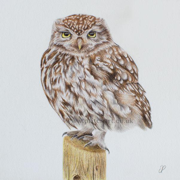 Little Owl thumbnail 2
