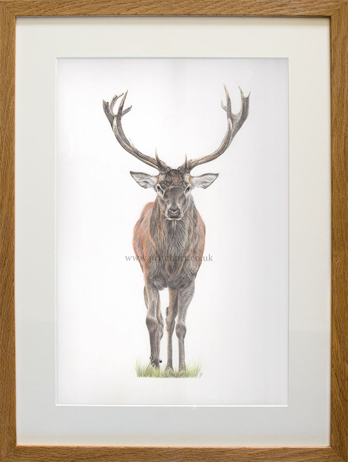Majesty - Preview image  British Wildlife Art