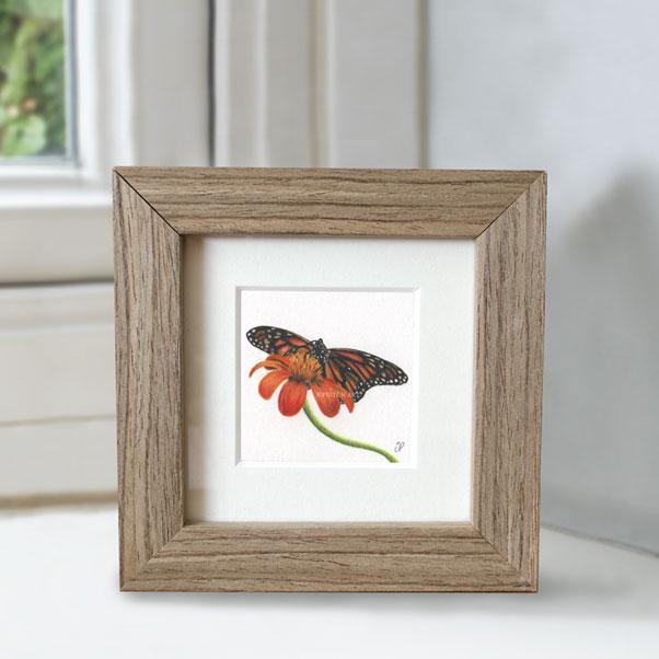 British Wildlife - Monarch Butterfly