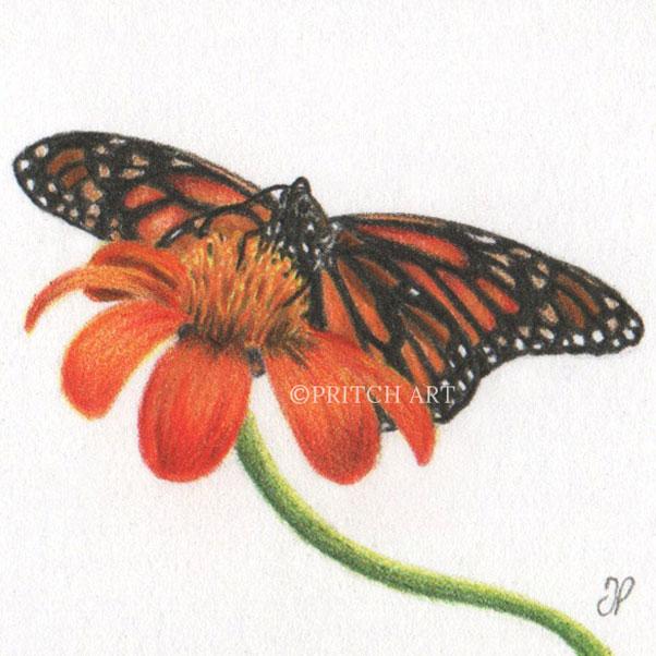 Monarch Butterfly thumbnail 2