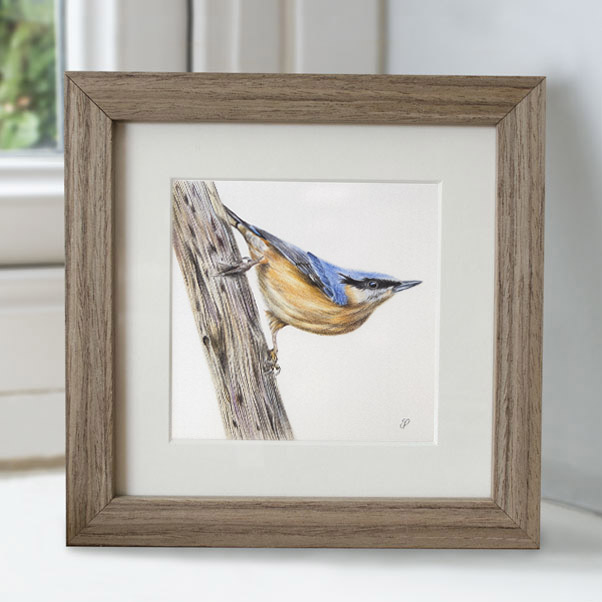 Nuthatch - Preview image  British Wildlife Art