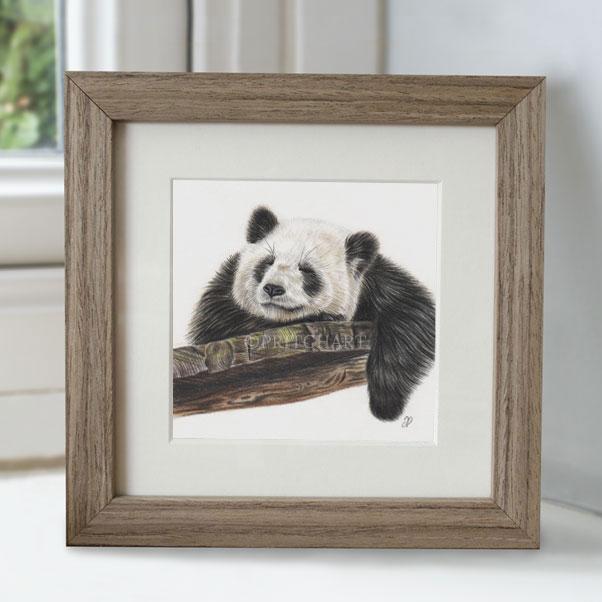 Panda - Preview image  British Wildlife Art