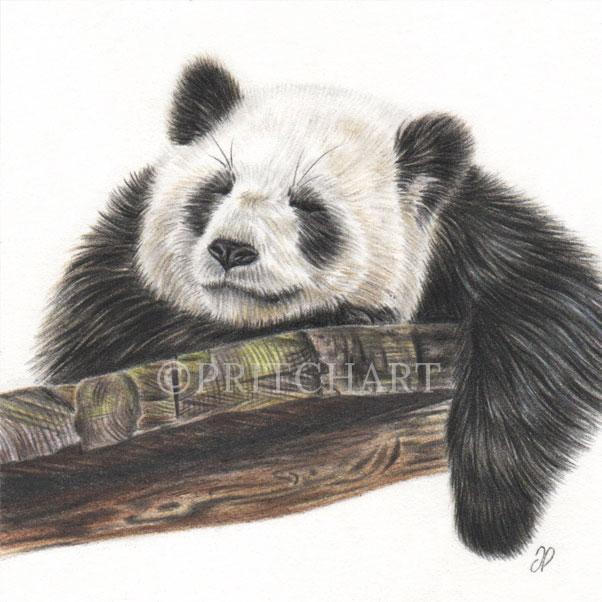Panda thumbnail 2