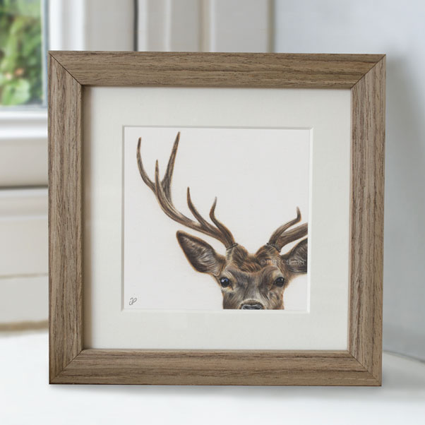Red Deer - Preview image  British Wildlife Art
