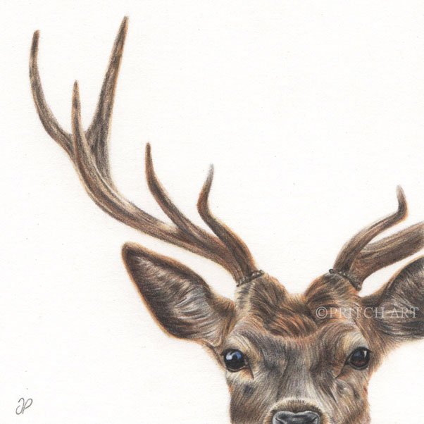 Red Deer thumbnail 2