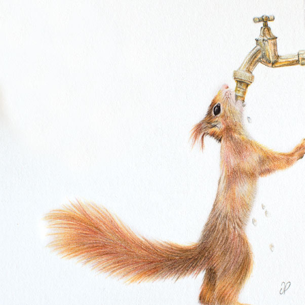 Red Squirrel thumbnail 2
