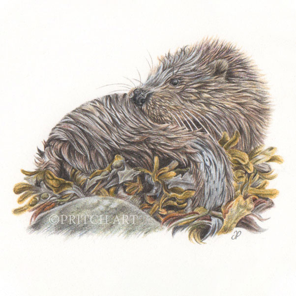Sea Otter thumbnail 2