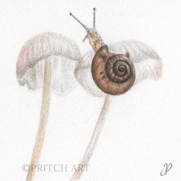 Snail thumbnail 2