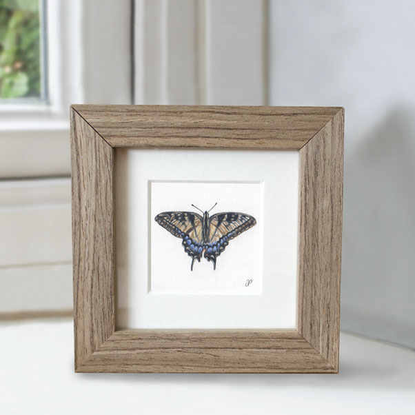 Swallowtail Butterfly - Preview image  British Wildlife Art