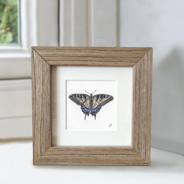 British Wildlife - Swallowtail Butterfly