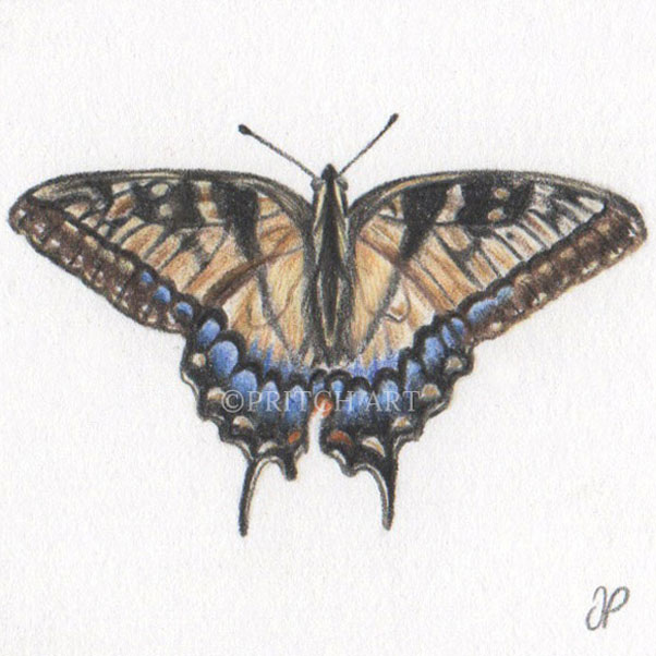 Swallowtail Butterfly thumbnail 2