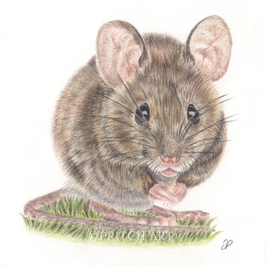 Wood Mouse thumbnail 2