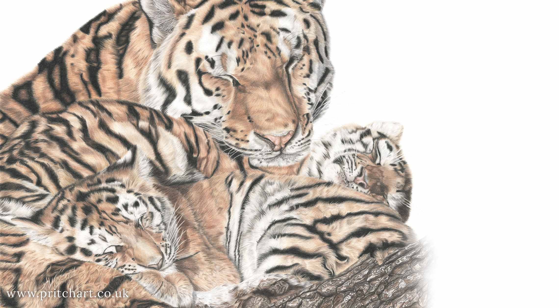 Pritch Art - Tiger family
